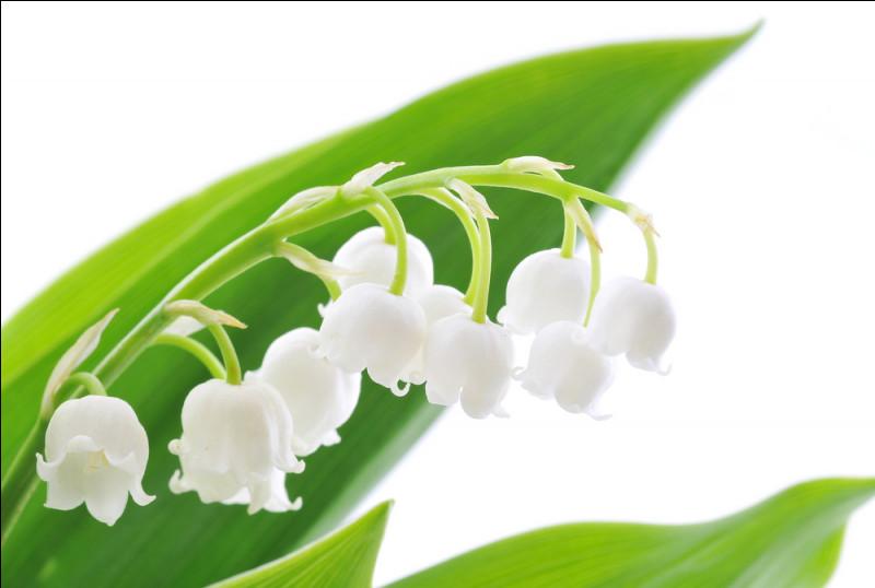Comment s'appelle la fleur du muguet ?
