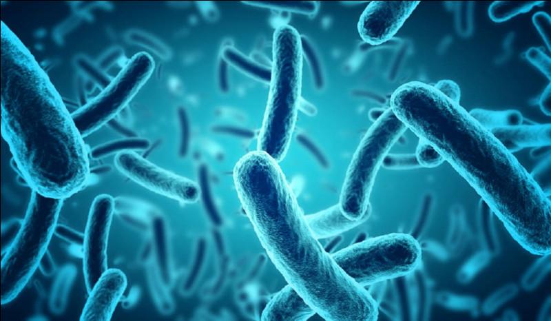 De quelle maladie le bacille de Koch est-il responsable ?