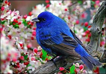 Aimes-tu les oiseaux ?