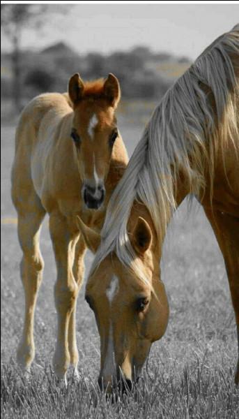 Comment est le cheval dont Hervé Bazin évoque la mort ?