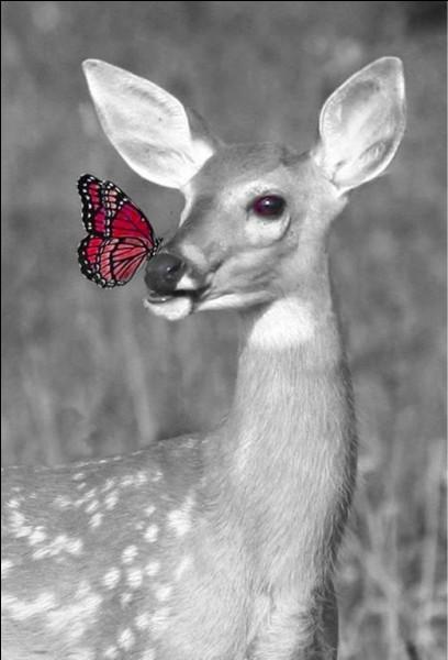Dans les années 60, il était question de ces deux animaux dans sa chanson !