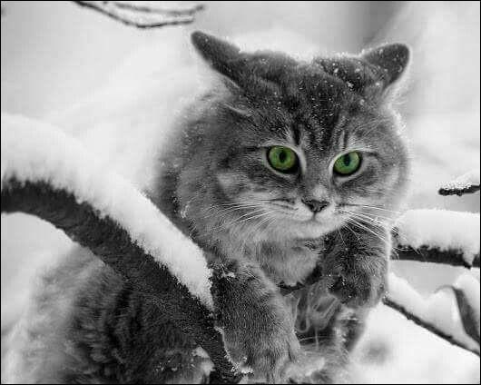"""Quel était le métier de Grippeminaud dans """"Le Chat, la Belette et le Petit Lapin"""" ?"""