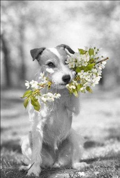 Dans quel livre parle-t-on du chien Montmorency ?