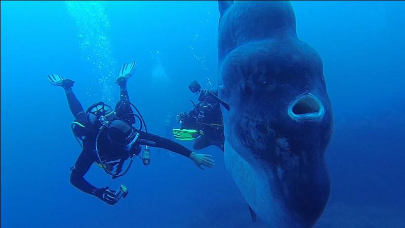 Quel est le plus gros des poissons osseux ?