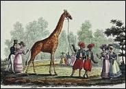 En quelle année la première girafe a-t-elle mis la patte sur le sol français ?
