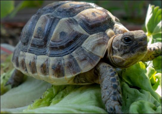 Quelle est la taille d'une tortue ?