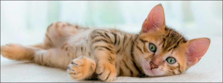 Combien de temps dort un chat quotidiennement ?