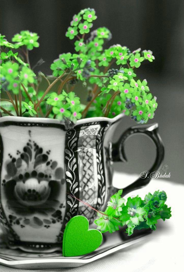 La culture générale se met au vert !