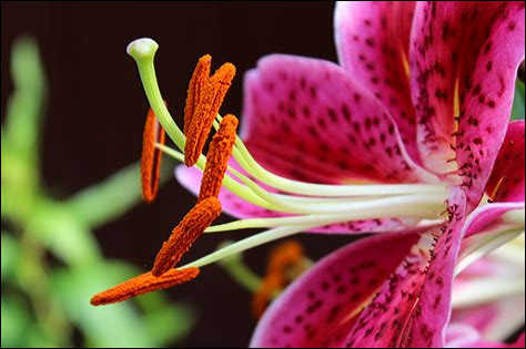 """À quel mot cette définition appartient-elle : """"Petit sac de l'étamine qui renferme le pollen"""" ?"""