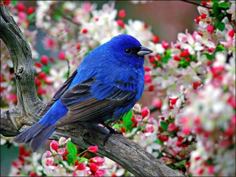 Combien existe-t-il d'espèces d'oiseaux environ ?