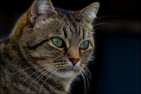 Les chats retombent toujours sur leurs pattes :