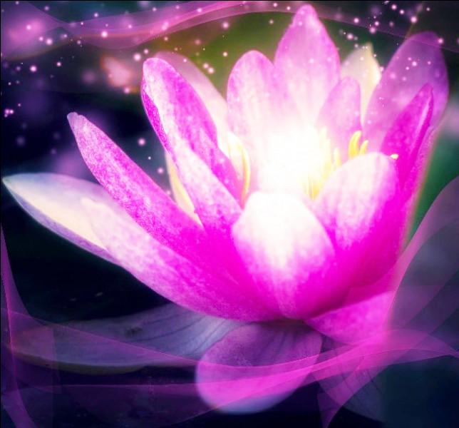 Trouvez-moi la fleur de lotus.