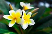 Les fleurs en anglais