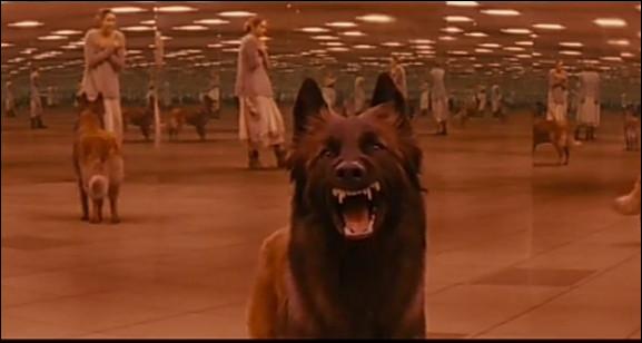 Un chien vient vers toi en grognant, que fais-tu ?