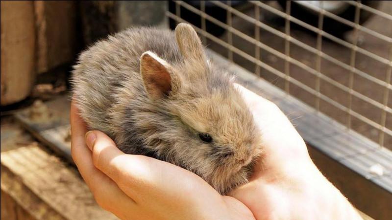Question plus dure, les lapins ne sont pas des rongeurs, alors, que sont les lapins ?