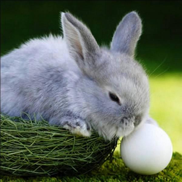 Quel est le nom scientifique du lapin ?