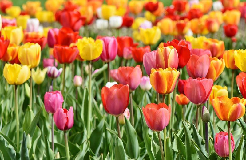 Quelle fleur es-tu ?