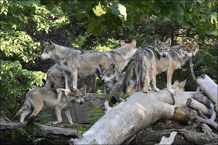 Dans laquelle de ces trois villes françaises peut-on pêcher le loup ?
