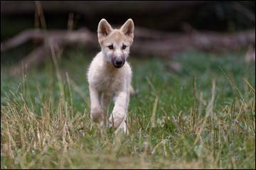 Trouvez le court métrage d'animation dont les héros sont un loup et un lapin !