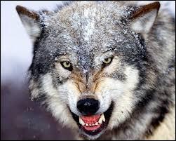 """Qui a écrit le poème """"Les Loups et les Brebis"""" ?"""