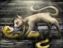 Pelage de Lion trouve que Cœur Cendré est plus belle et gentille qu'Œil de Myosotis :
