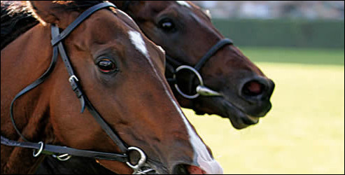 Lorsque la course approche, certains chevaux ont de l'urticaire car ils sont effrayés.