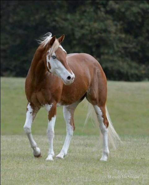 Les chevaux ont tous des goûts différents.