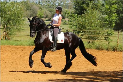 Quand on monte un cheval, celui-ci doit avoir le dos rond.