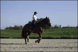 De quel côté doit-on monter à cheval ?