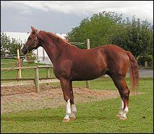 De quelle famille est le cheval ?