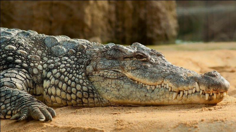 Le sexe du crocodile sera défini en fonction de l'emplacement de l'œuf.