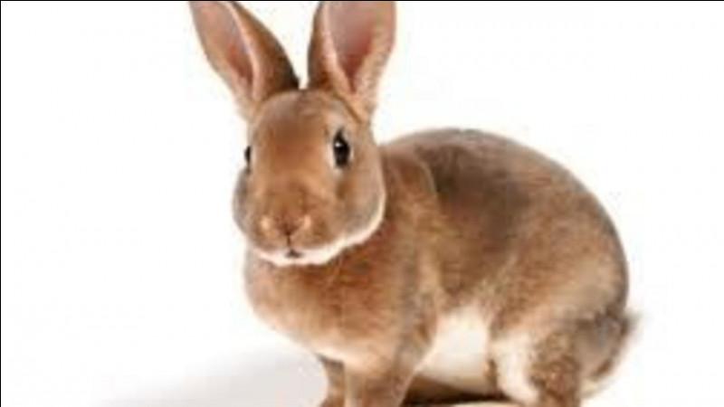 Le lapin est doté d'une vision de...