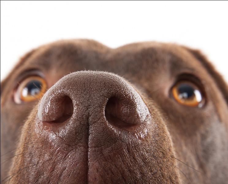 Chaque truffe est unique chez le chien