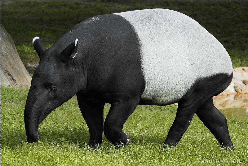 Le tapir ne vit qu'en Amérique !