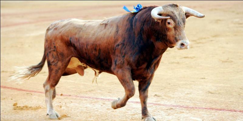 Le rouge énerve les taureaux :