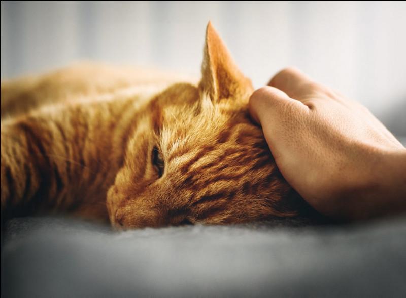 Le chat est-il un animal en voie d'extinction ?