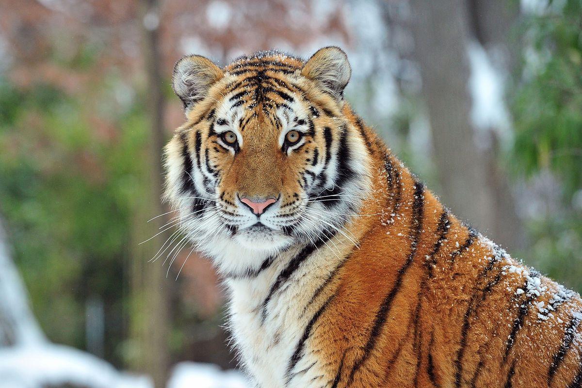 Que sais-tu sur les animaux en voie d'extinction ?