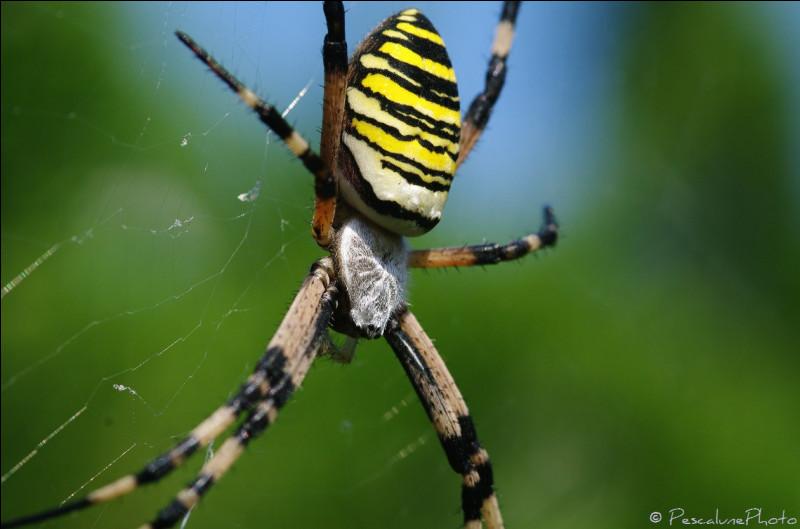 Toutes les araignées fabriquent une toile de capture.