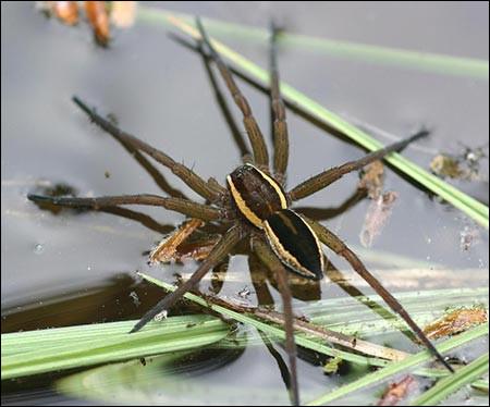 Les araignées jouent un rôle essentiel dans la nature.