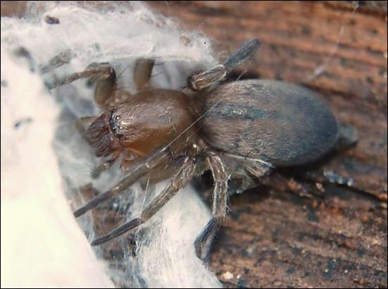 Toutes les araignées produisent de la soie.