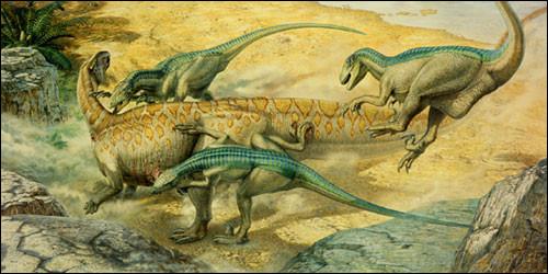 C'est une scène bien connue, une meute de Deinonychus s'attaquant à un Tenontosaurus.Mais combien de dents avait le Deinonychus, ce redoutable chasseur ?