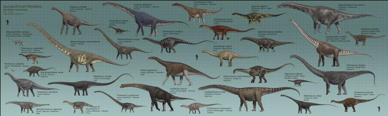 En évoquant les dinosaures, on pense immédiatement au Tyrannosaurus rex ou bien au Diplodocus.En effet, les sauropodes étaient les plus grands et les plus lourds de tous. L'Argentinosaurus, lui, pesait une masse impressionnante de :