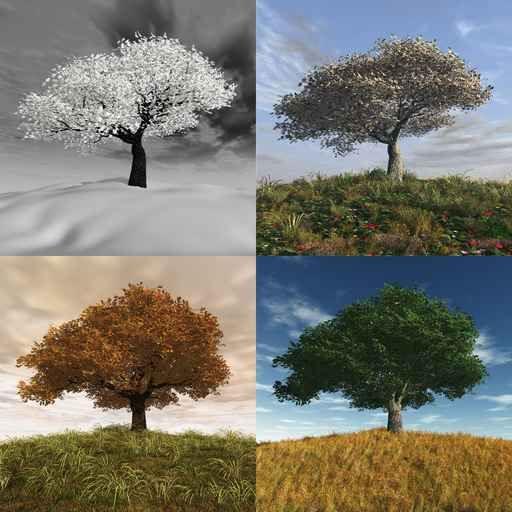 Le quiz des 4 saisons !