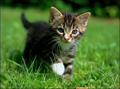 La chatte est...