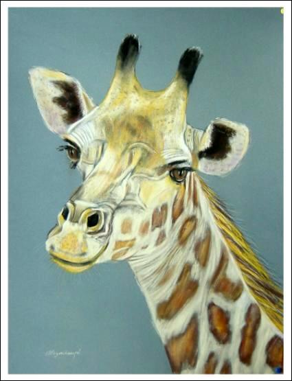 La girafe est...