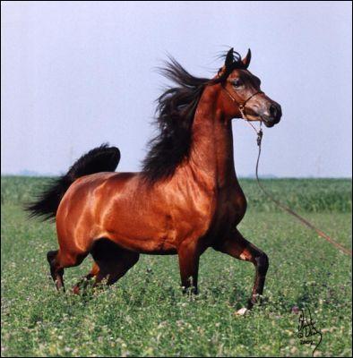 Le cheval est...