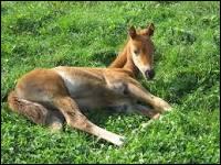 À quel âge les chevaux ne sont-ils plus considérés comme des poulains ?