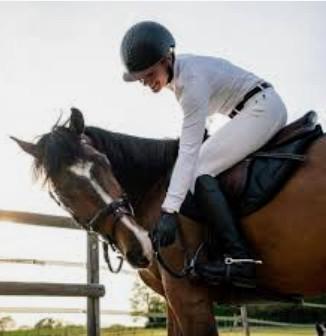 Équipements du cavalier et du cheval