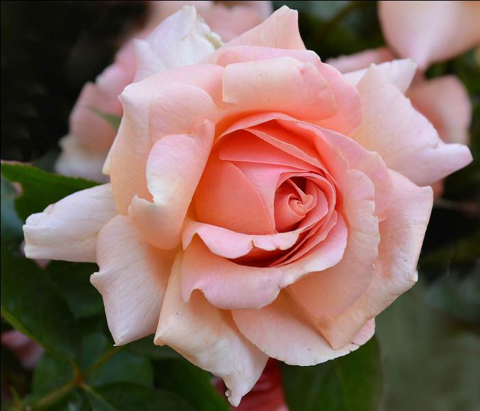 "Comment dit-on ""Rose"" ?"