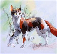 Quel est le nom de chaton de Plume Rousse ?